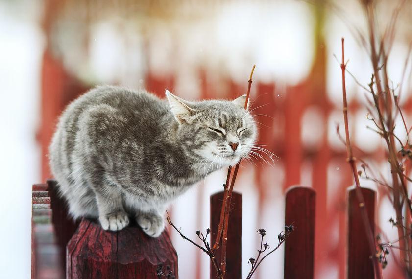 pheromones in cats