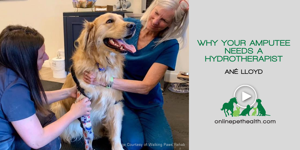 Why your Amputee Needs a Hydrotherapist