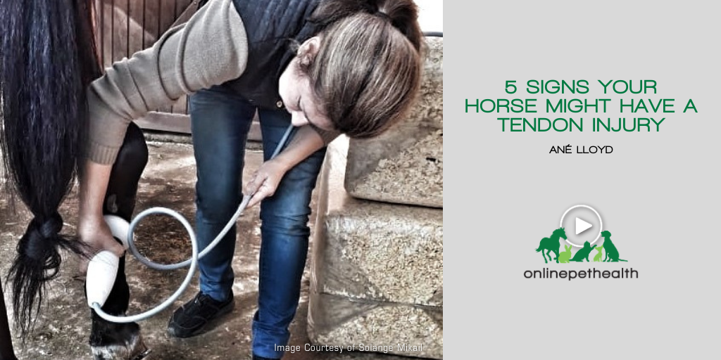 5 Signs Your Horse Might Have a Tendon Injury