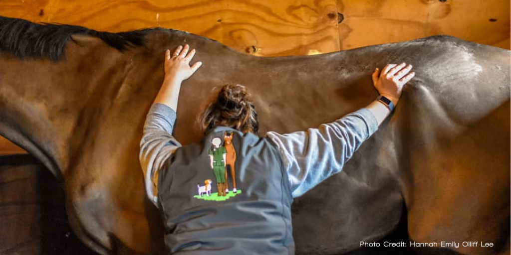 The Causes of Equine Back Pain